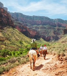 Hikers explore the Grand Canyon on horseback.