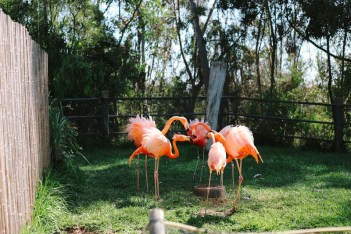 San diego zoo flamingo