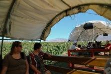 Wagons at Gilcrease Orchard