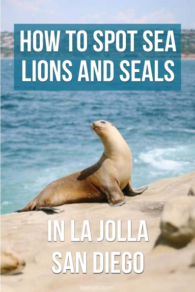 when-is-the-best-time-to-see-sea-lions-and-seals-in-la-jolla
